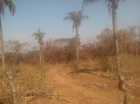 Terreno de 5 hectáreas con arroyo