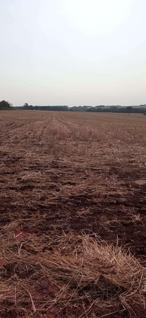 50 hectáreas en Minga Guazú - 2
