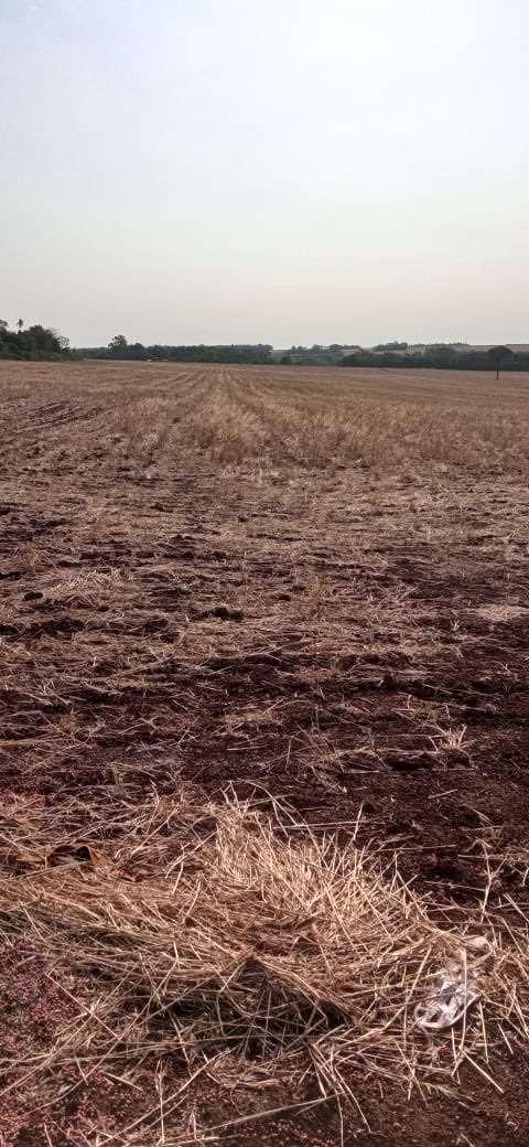 50 hectáreas en Minga Guazú - 4