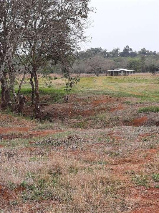 Terreno de 30 hectáreas km 37 Colonia Yguazú - 2