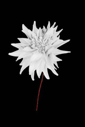Flor artificial de dalia blanco 42cm