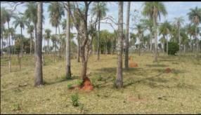 10 hectáreas en Piribebuy