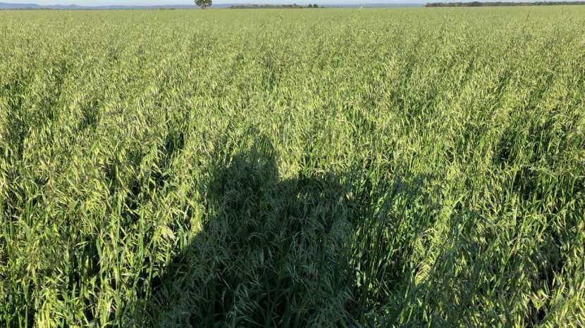 11636 hectáreas en Alto Paraguay - 0