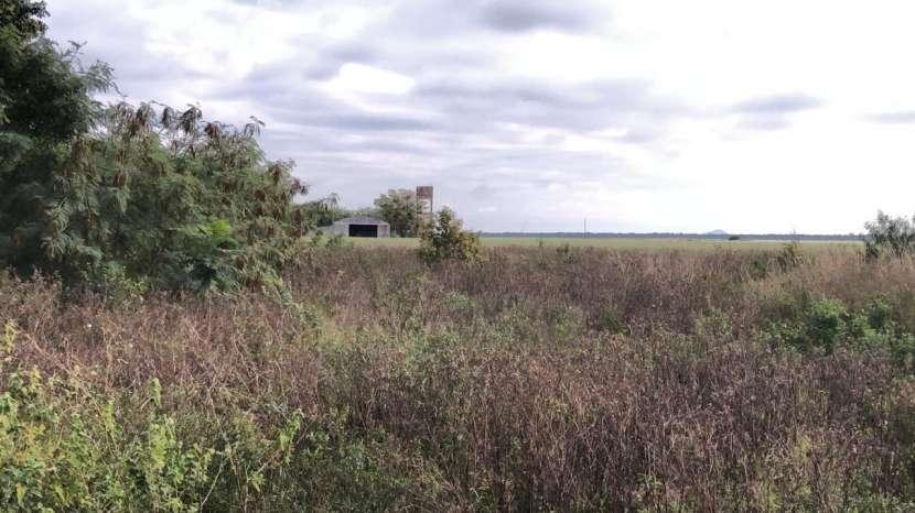 11636 hectáreas en Alto Paraguay - 1
