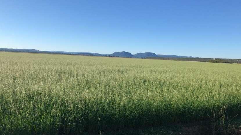 11636 hectáreas en Alto Paraguay - 2