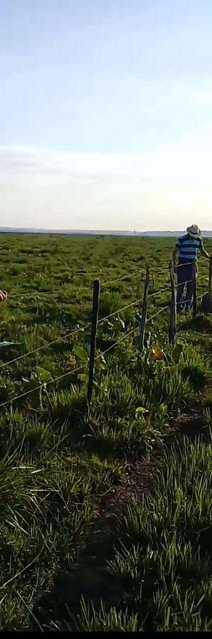 11636 hectáreas en Alto Paraguay - 3