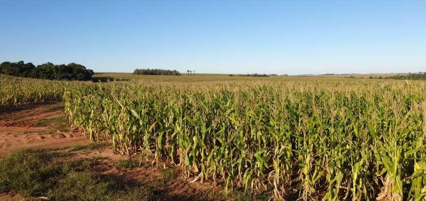 66 hectáreas en Santa Rita Alto Paraná - 2