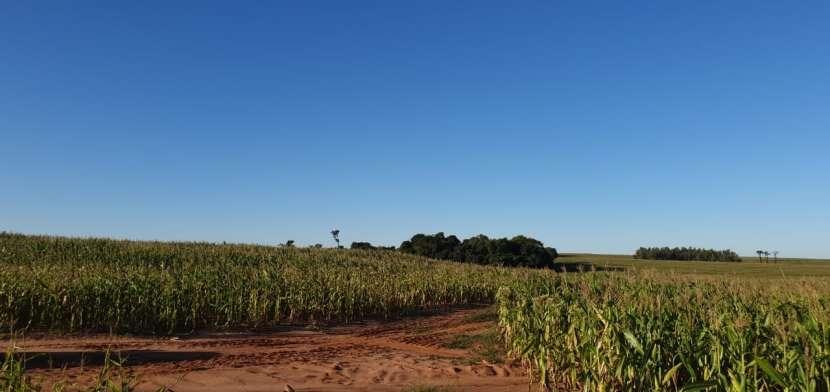 66 hectáreas en Santa Rita Alto Paraná - 0