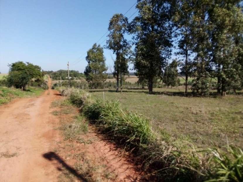 34.5 has. en Santa Rita Alto Paraná - 3