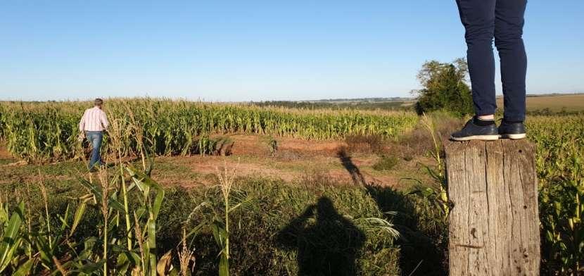 66 hectáreas en Santa Rita Alto Paraná - 3