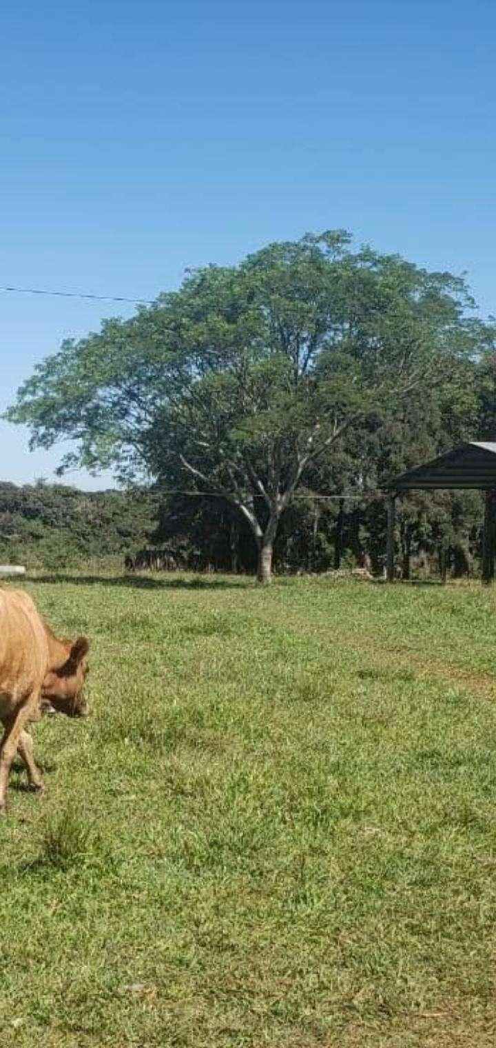 Propiedad en Caaguazú de 42 hectáreas - 0