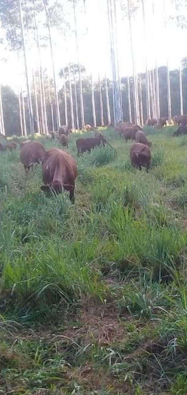 Propiedad en Caaguazú de 42 hectáreas - 2