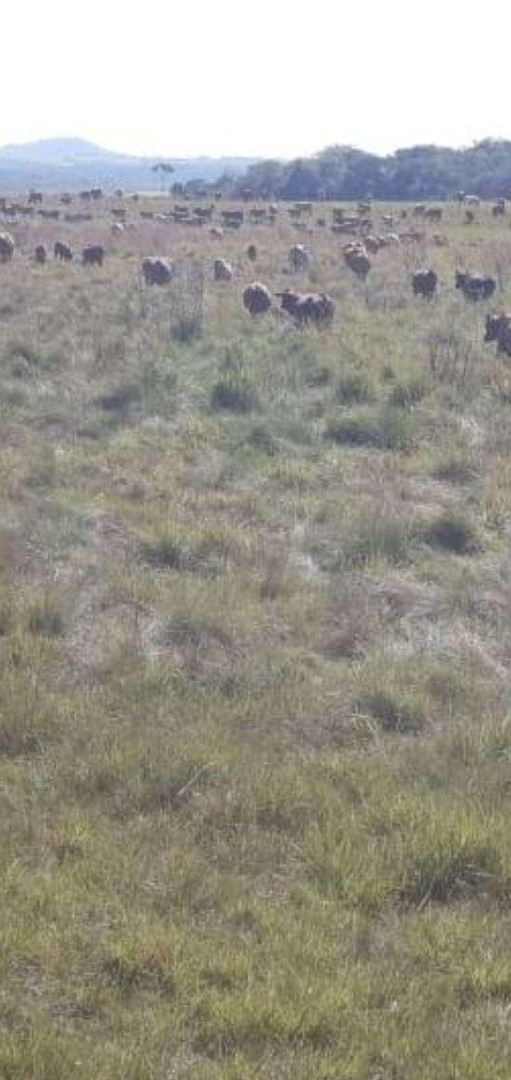 Propiedad en Caaguazú de 42 hectáreas - 3