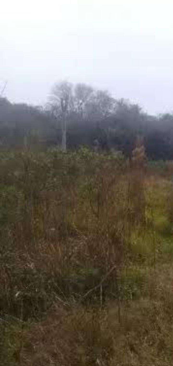 Propiedad en Caaguazú de 42 hectáreas - 4