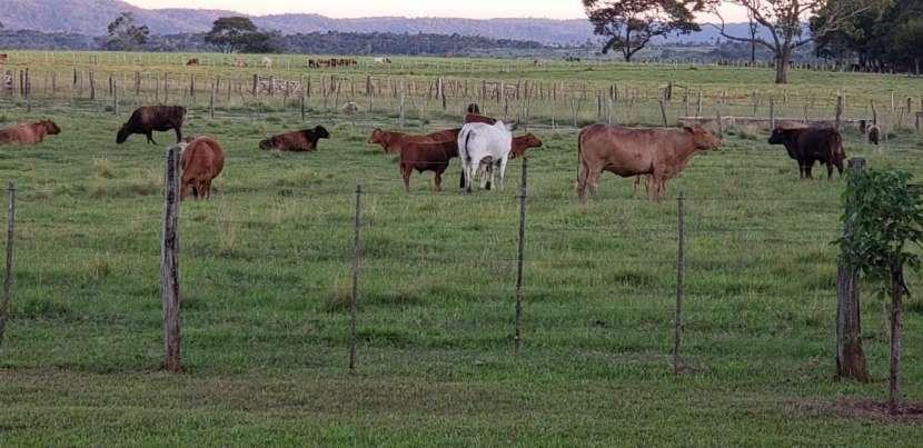 Propiedad en Caaguazú de 42 hectáreas - 7
