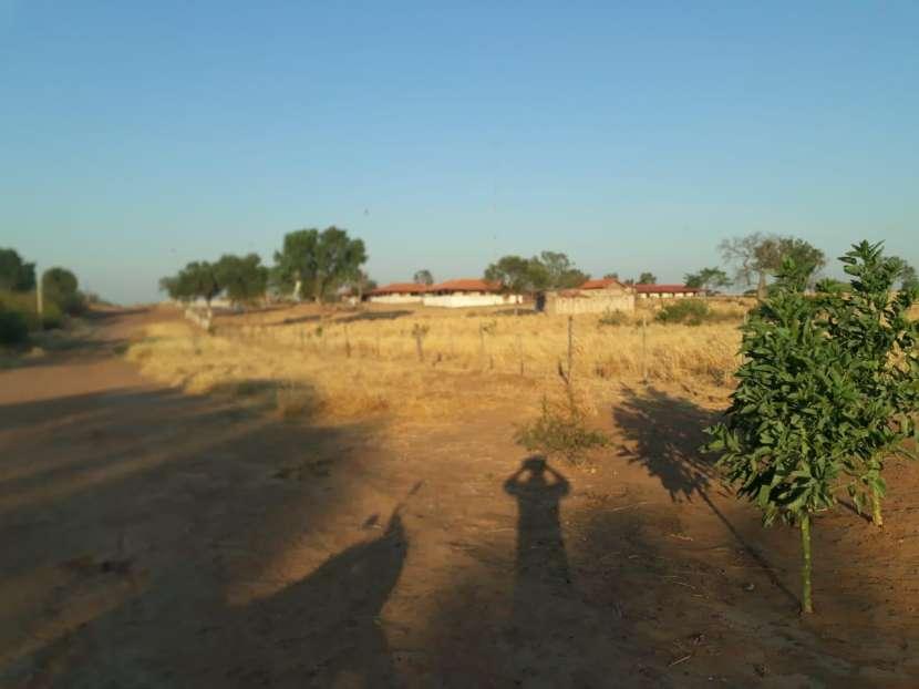11.236 hectáreas en Teniente Pico - 3