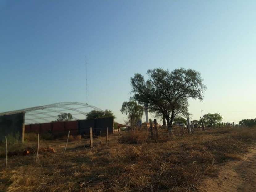 11.236 hectáreas en Teniente Pico - 4