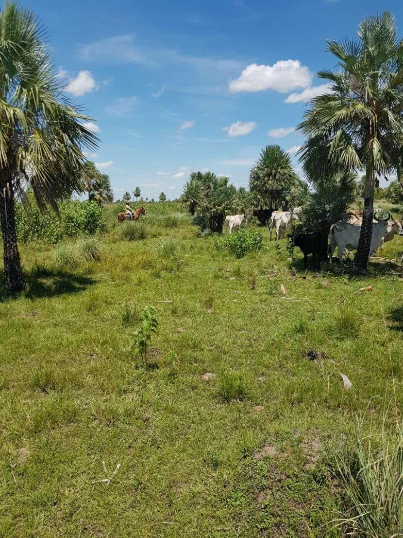500 hectáreas - 6