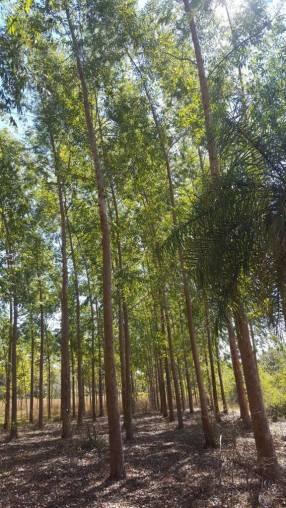 Terreno de 17 hectáreas en Itá