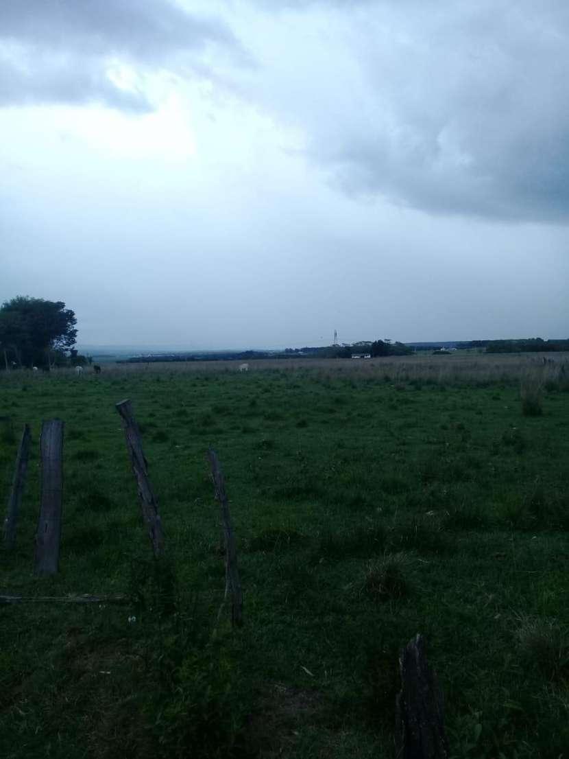 Terreno de 6 hectáreas - 2