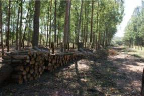 128 hectáreas en Emboscada