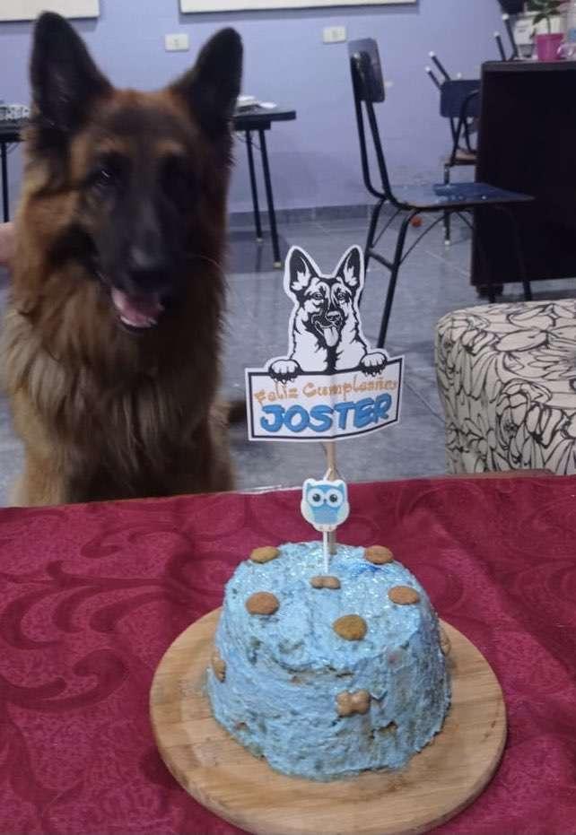 Torta de cumple para perros y gatos - 1