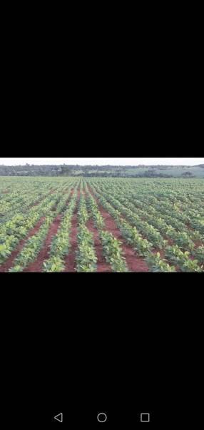 Propiedad rural en Caaguazú