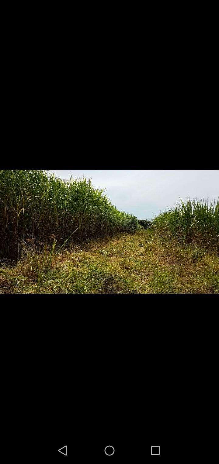 Propiedad rural en Caaguazú - 3