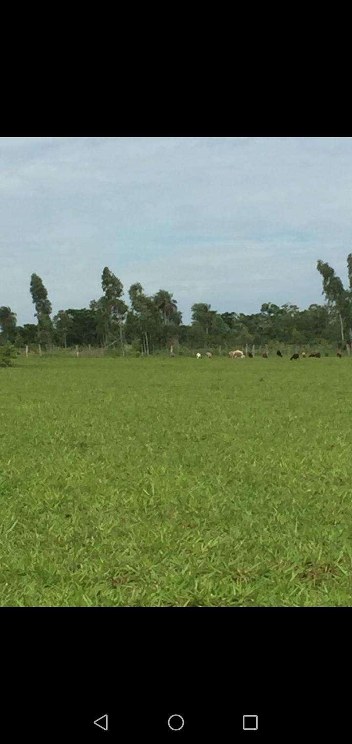 Propiedad rural en Caaguazú - 4