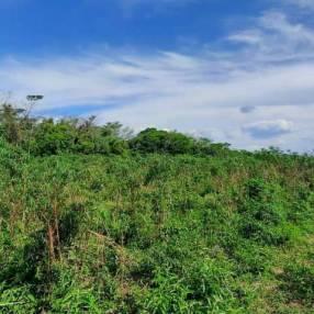 Terreno de 16,5x45 zona Ana Díaz Mercado 4