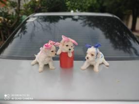 Caniche micro toys