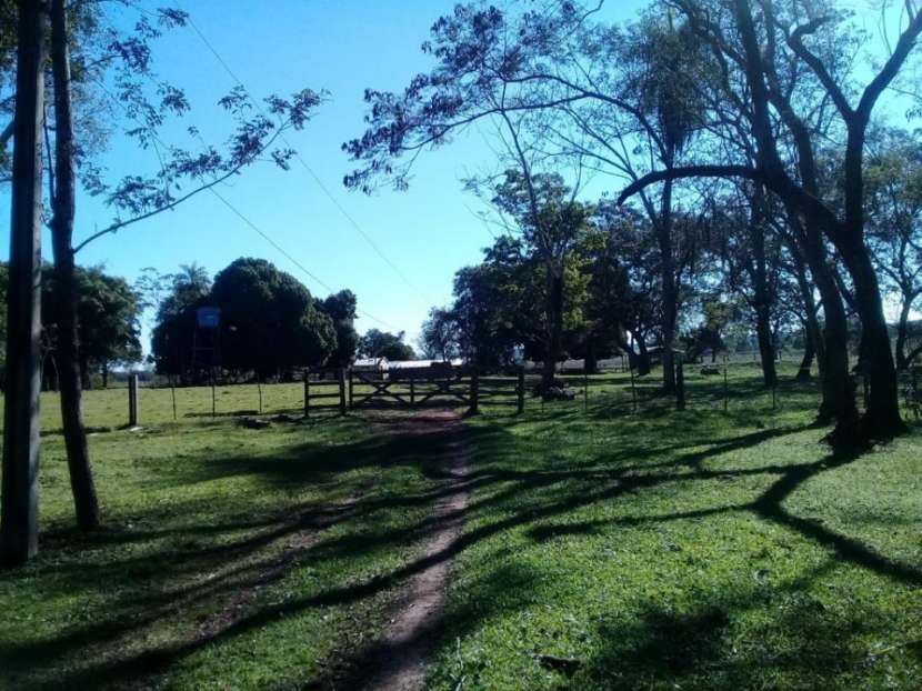 Campo de 66 hectareas en Nueva Londres - 2