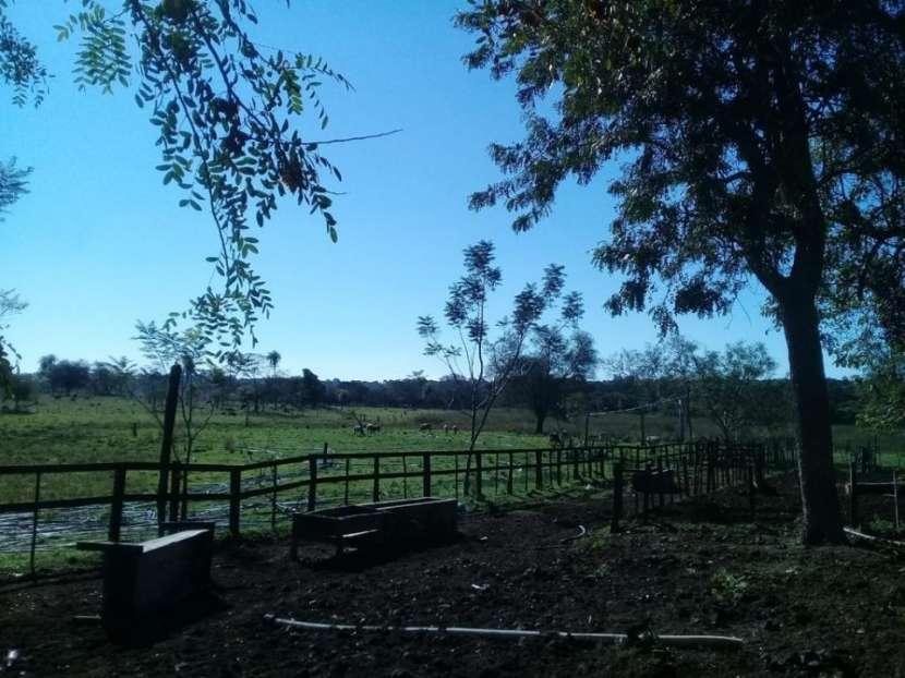 Campo de 66 hectareas en Nueva Londres - 6