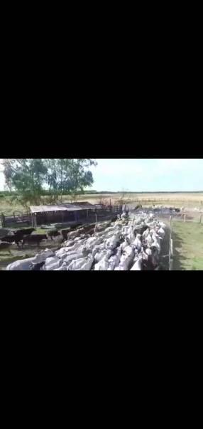 Campo de 576 hectáreas en Paraguarí