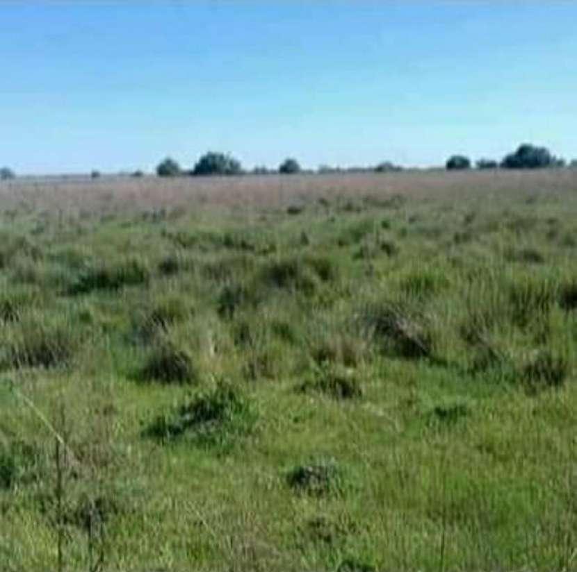 Campo de 343 hectáreas en Yataity Los Laureles - 3
