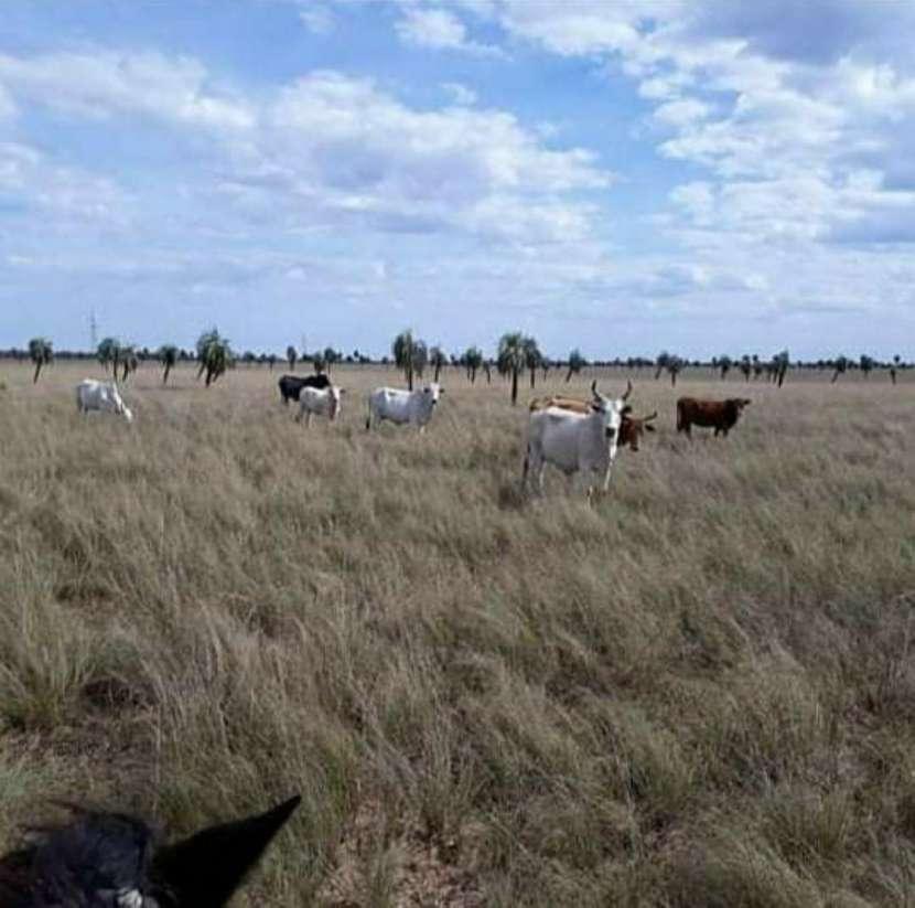 Campo de 343 hectáreas en Yataity Los Laureles - 4