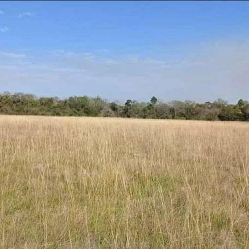 Campo de 343 hectáreas en Yataity Los Laureles - 5