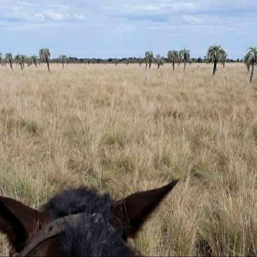 Campo de 343 hectáreas en Yataity Los Laureles - 6