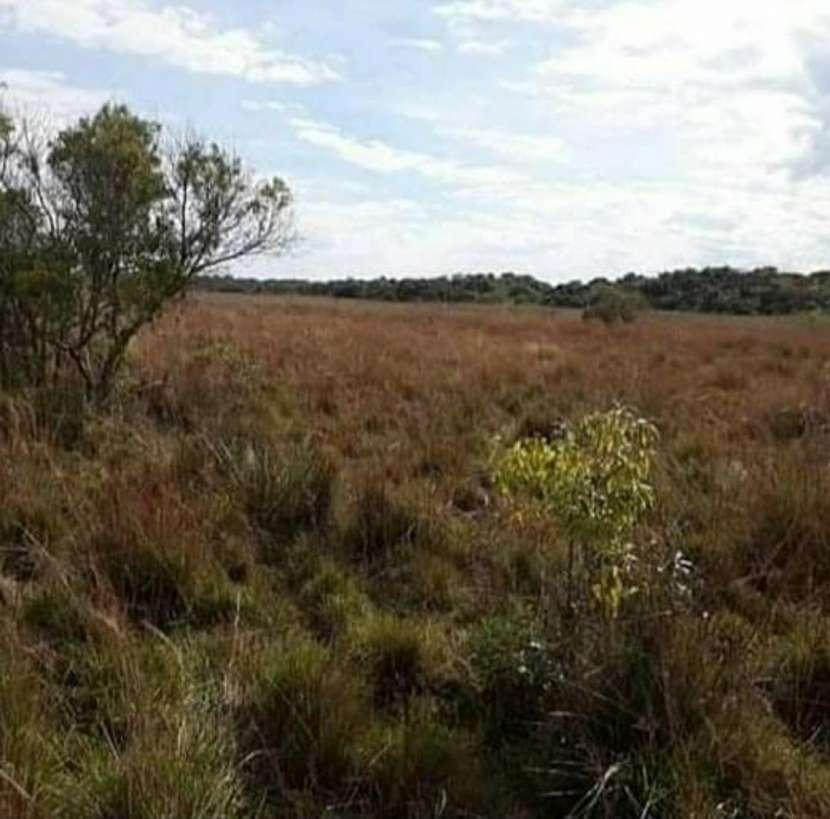 Campo de 343 hectáreas en Yataity Los Laureles - 7