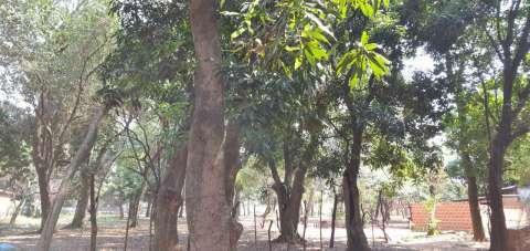 Terrenos en Capiatá Km 23 ruta 2 - 0