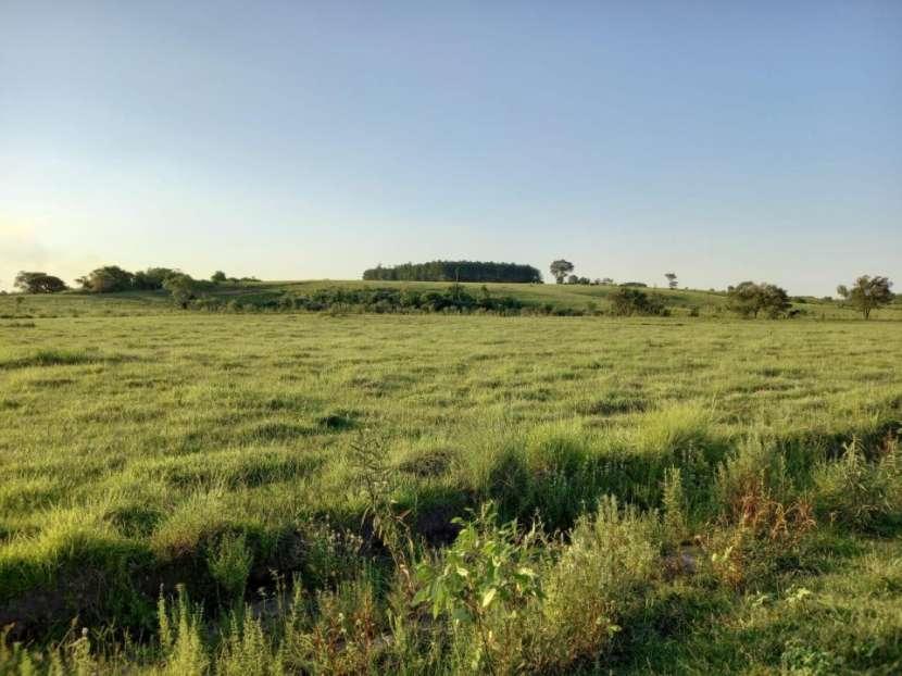 Terreno 30 hectáreas en Alto Verá Itapúa - 8