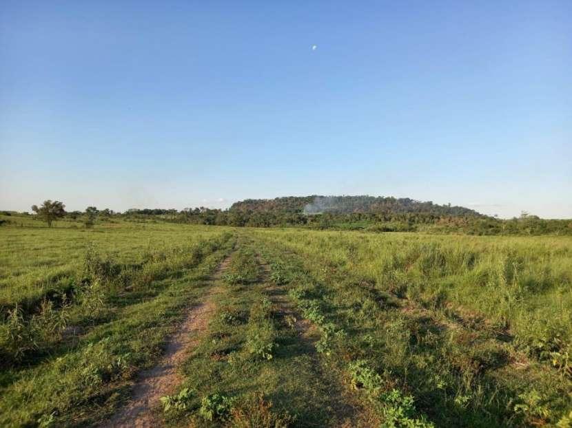 Terreno 30 hectáreas en Alto Verá Itapúa - 6