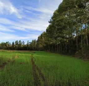 Campo de 26,6 hectáreas en María Auxiliadora Itapuá