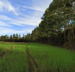 26,6 hectáreas  Ma. Auxiliadora Itapuá