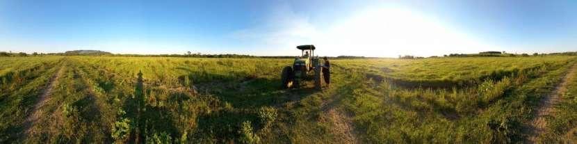 Terreno 30 hectáreas en Alto Verá Itapúa - 4