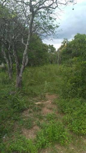 Terreno de 5 hectáreas 1/2 en Oliva