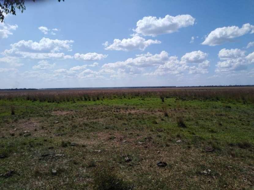 Campo de 156 has. en Isla Alta – Itapua - 4