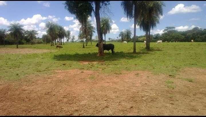 Campo de 156 has. en Isla Alta – Itapua - 3