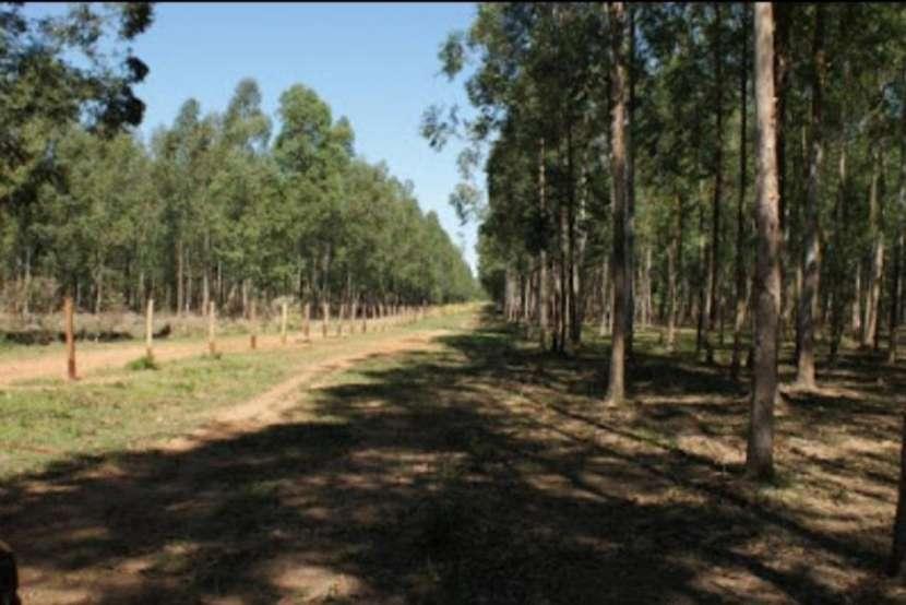 Campo 128 hectáreas en Emboscada - 0