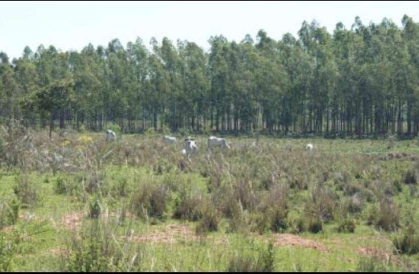 Campo 128 hectáreas en Emboscada - 1